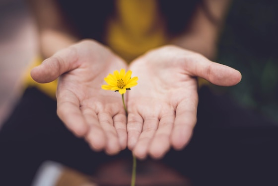 Hands holding a yellow daisy.