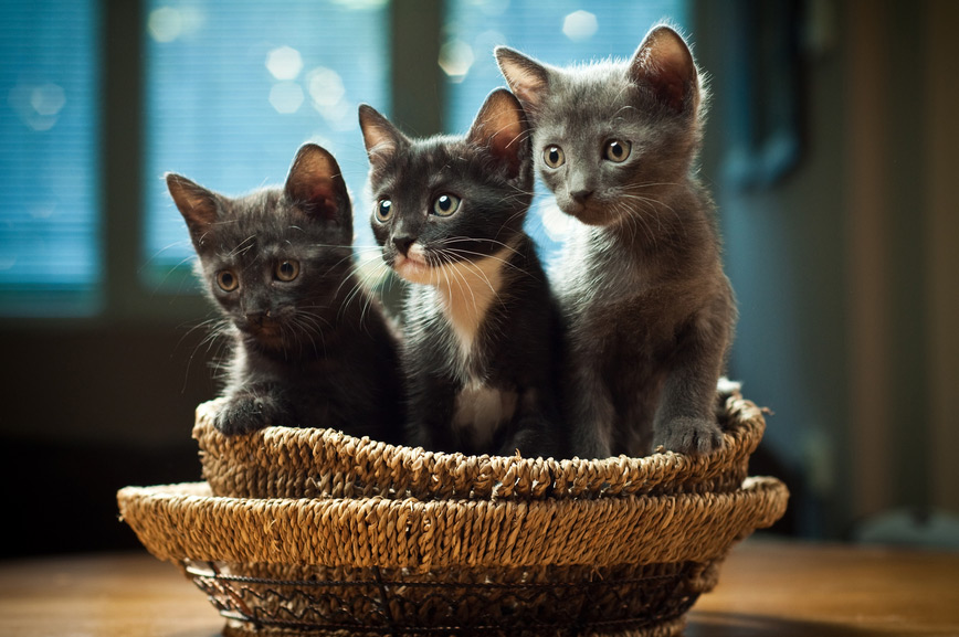 Three kittens are anxious to get started.
